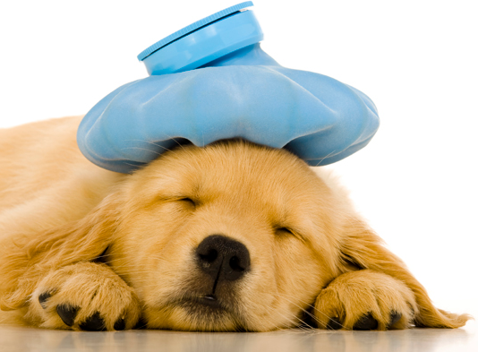 13 animal emergencies that should receive immediate veterinary consultation and/or care
