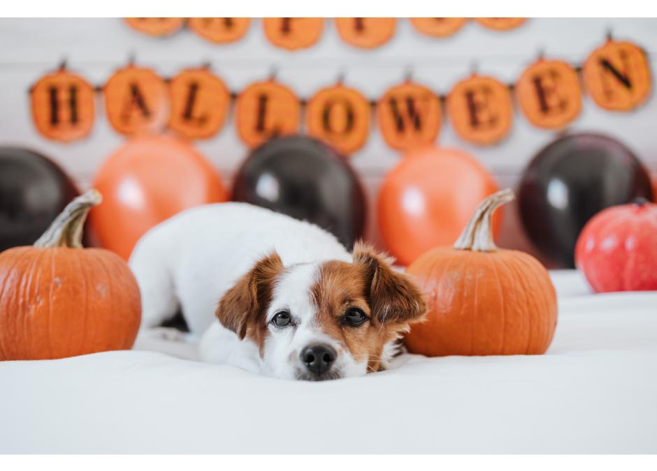 Keeping Pets Healthy & Safe at Halloween
